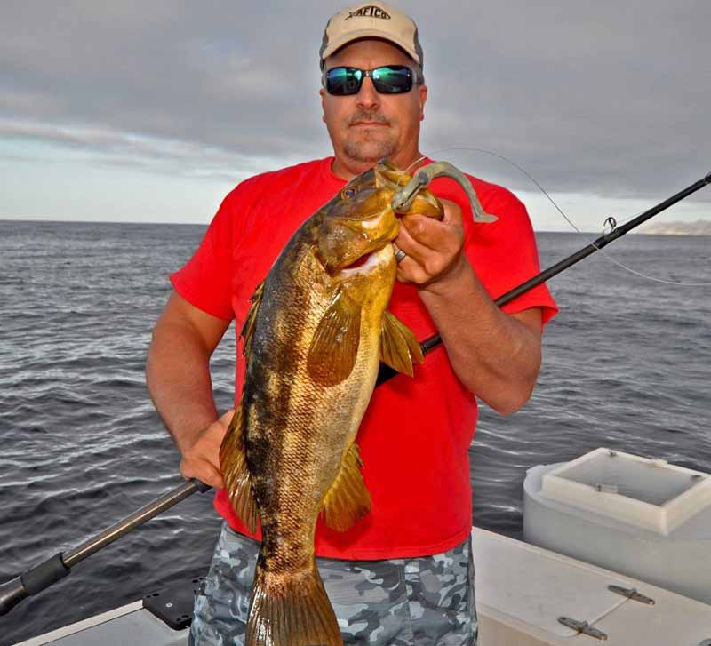 Webinar: Targeting Island Calicos with Erik Landesfeind