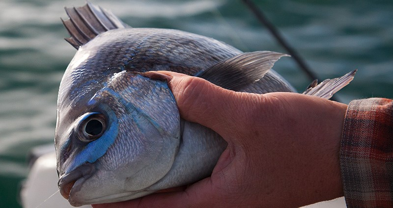 Webinar: Black Bream Fishing Techniques and Conservation Efforts