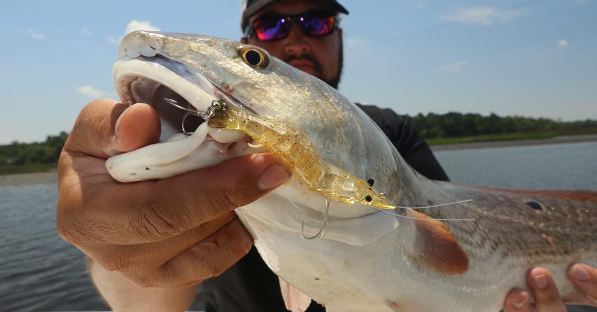 Webinar: Redfish Time is Now!