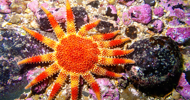 Nearly 100 Marine Conservation Zones Now Marked in Navionics Charts of the U.K.